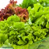 Vitamin K , an essential clotting factor