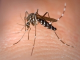 Infectious diseases caused by introduced tiger mosquito