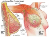 Possible causes of breast pain