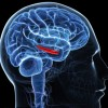 The tricks to extend human memory