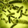 Types of intestinal bacteria