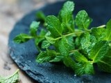 Common Herbs and Why You Should Eat Them