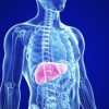 Signs that indicate that you should clean your liver