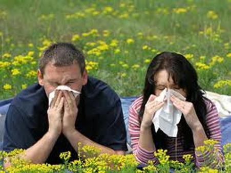 allergie-s
