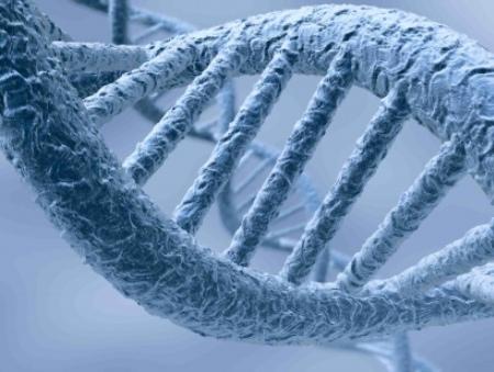 DNA-s