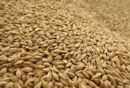 wheat-allergy