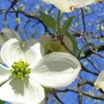 spring-energy