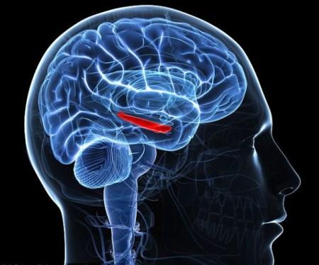 human-memory